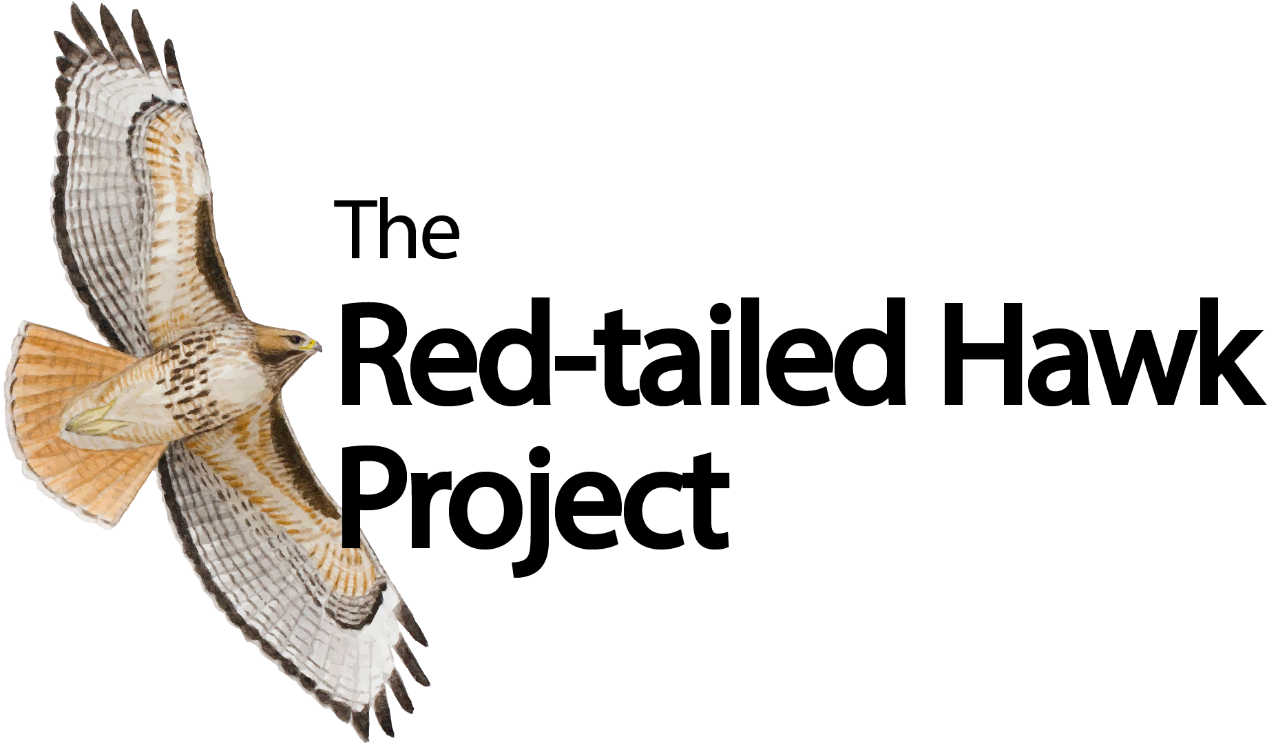 Red-tailed Hawk Project